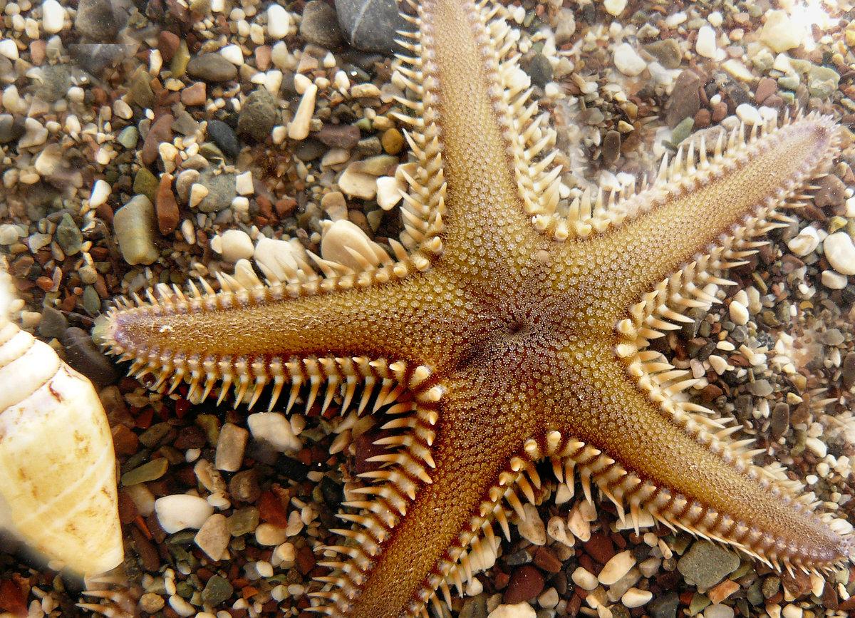 красивое смотреть картинки морских звезд детей умение составлять