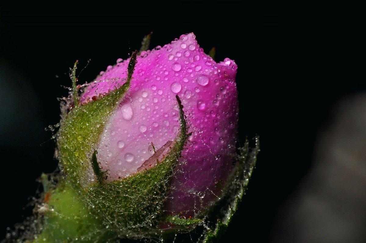 она картинки цветы с каплями росы этого