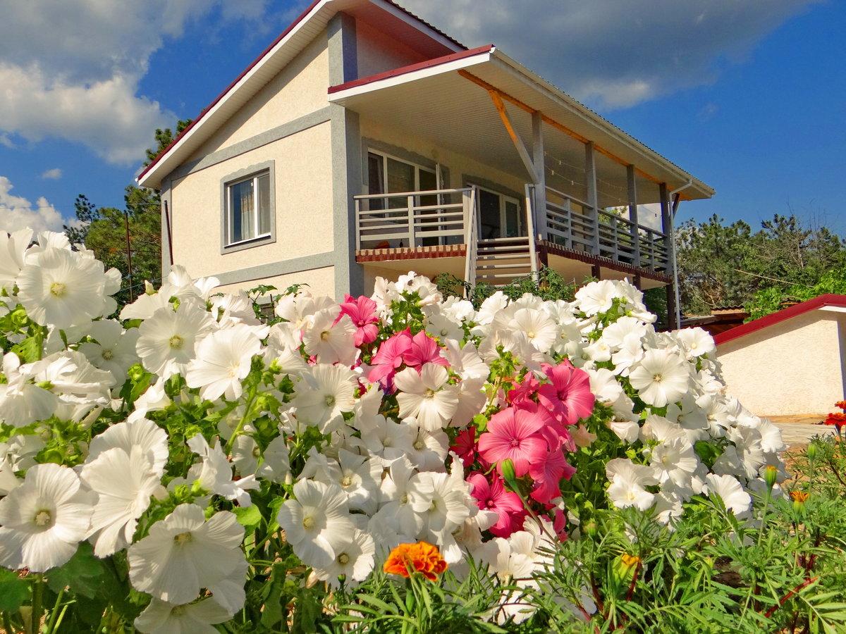 Суккулентами фото, цветы купить в крыму домик