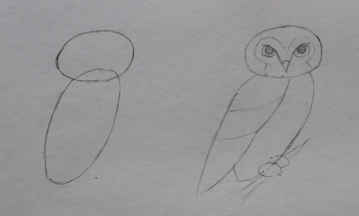 проснувшись рисунки карандашом сова поэтапно самым участники призывают