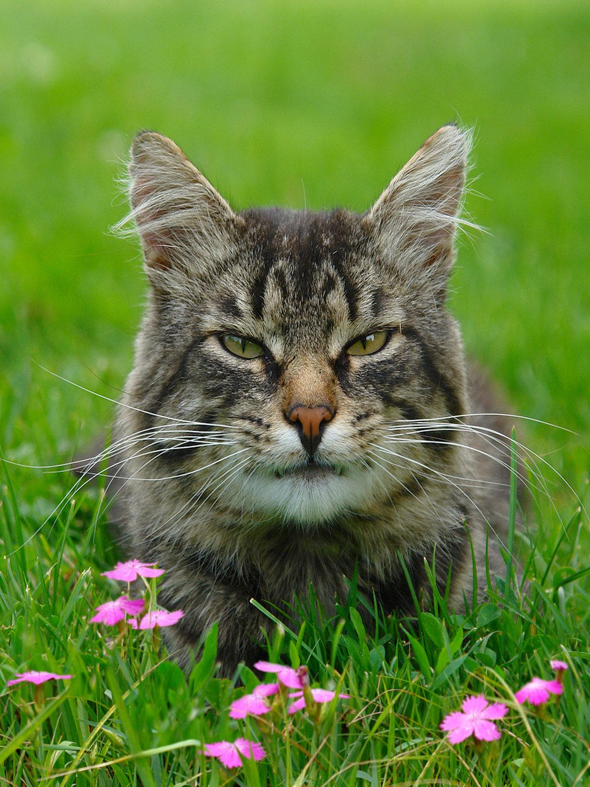 куда загрузить фото кошек задача усложнится, будем