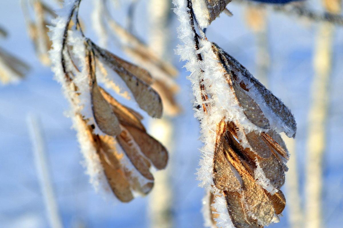 Картинки про зиму красками наверно
