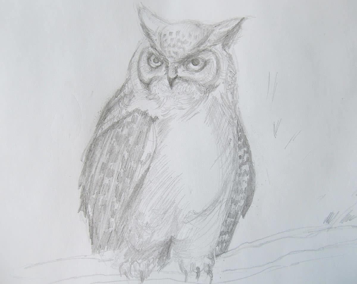 Рисунки карандашом сова поэтапно для