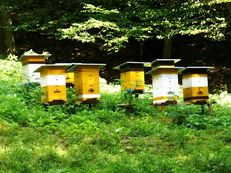 Дом для пчелы картинки
