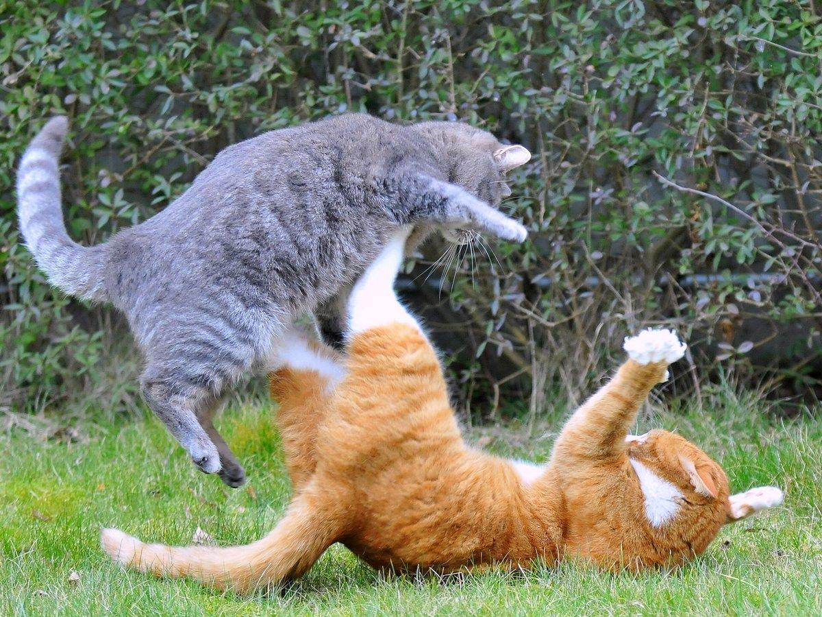 Поздравительная открытка, видео смешные коты с картинками