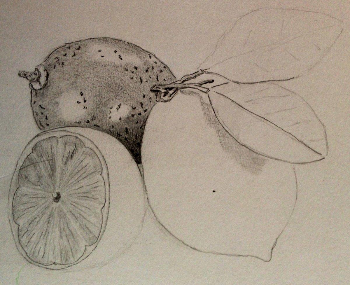 Марта, фрукты картинки красивые карандашом