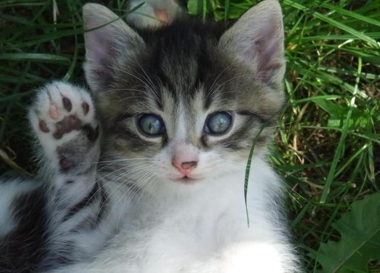 Котенок здоровается картинки