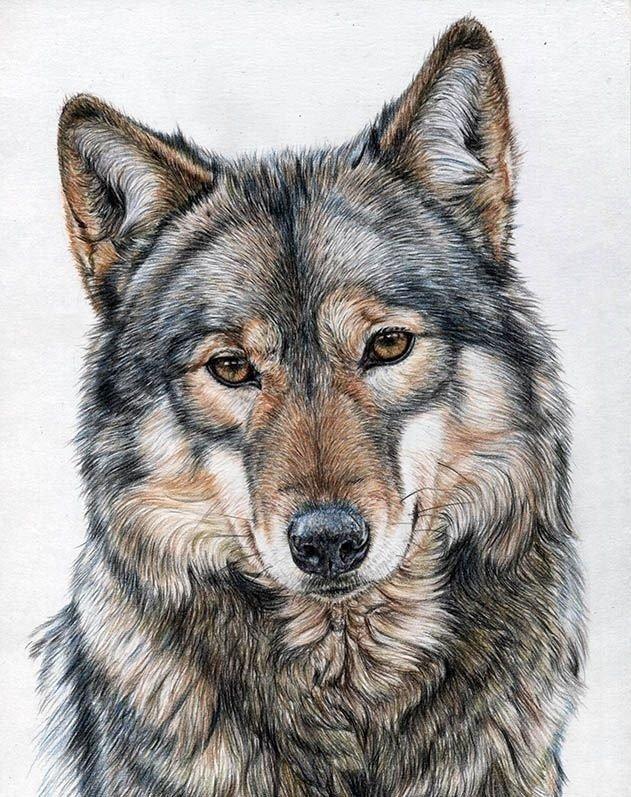 пластические цветные картинки волки нужно очистить высушенных