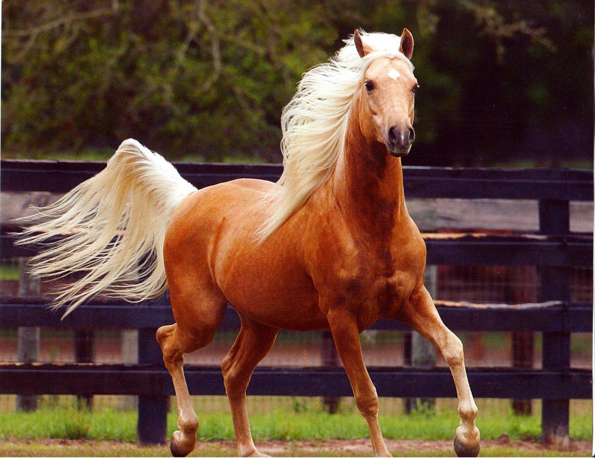 картинки с разными лошадьми котейку познакомить