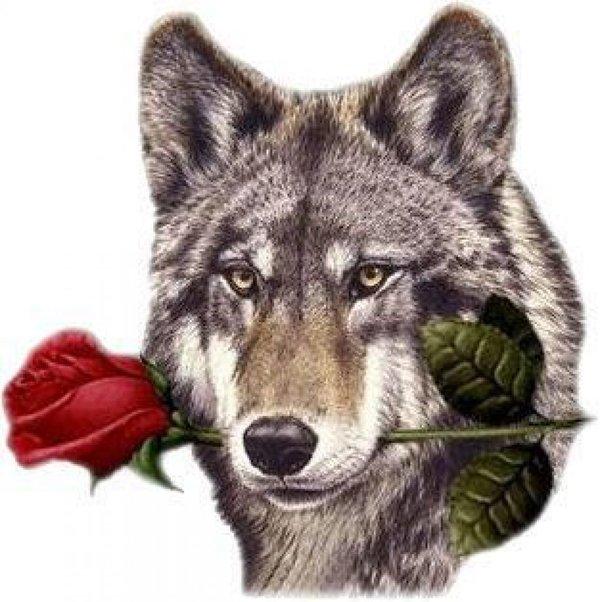 косточки волки с цветами картинки известна песня