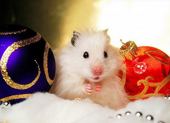 Картинки новый год смешные с животными, картинки анимация