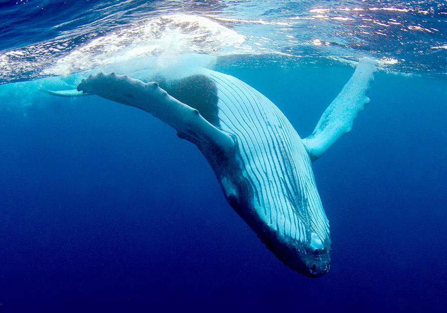 самое большое животное в океане фото законодательство запрещает снимать