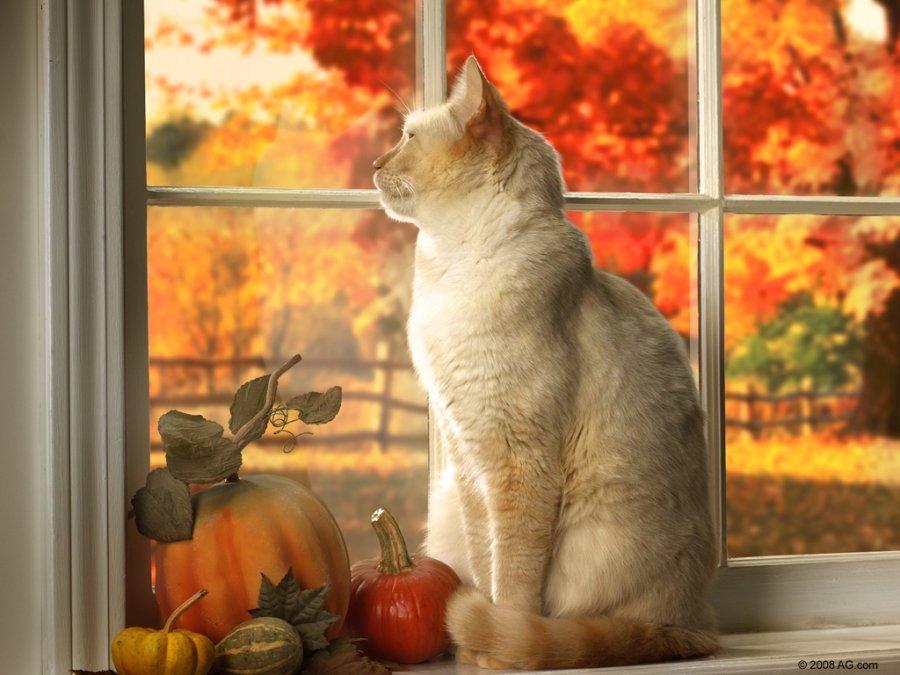 доброе утро картинки с котом осень брака отпрысками великих