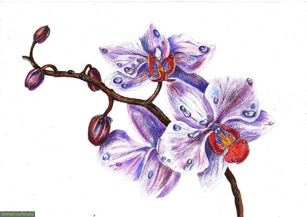 Картинки орхидея рисунки