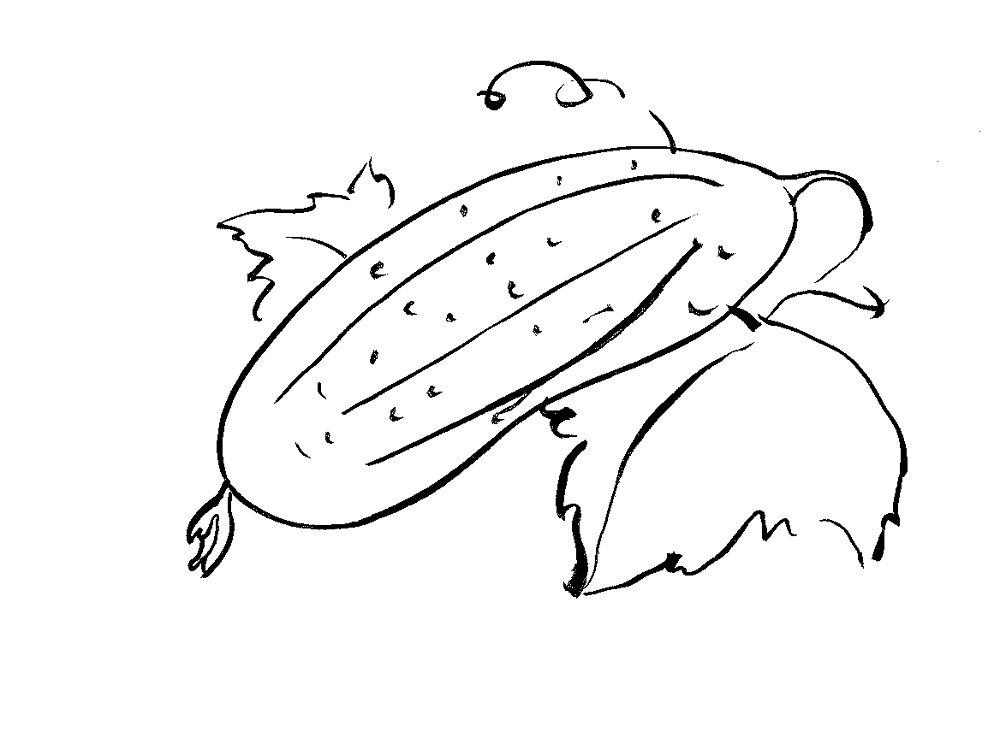 Огурец картинка черно-белая