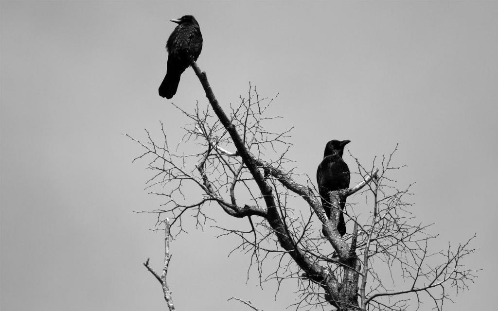 Если птицы белые (голубы, лебеди), то это говорит о получении приятных вестей.