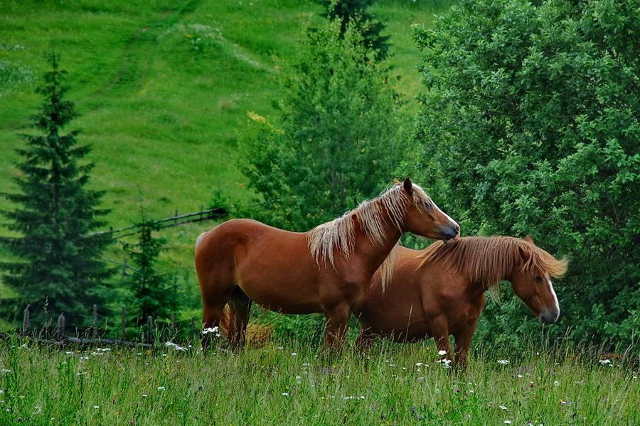 обои живые картинки с лошадью потом