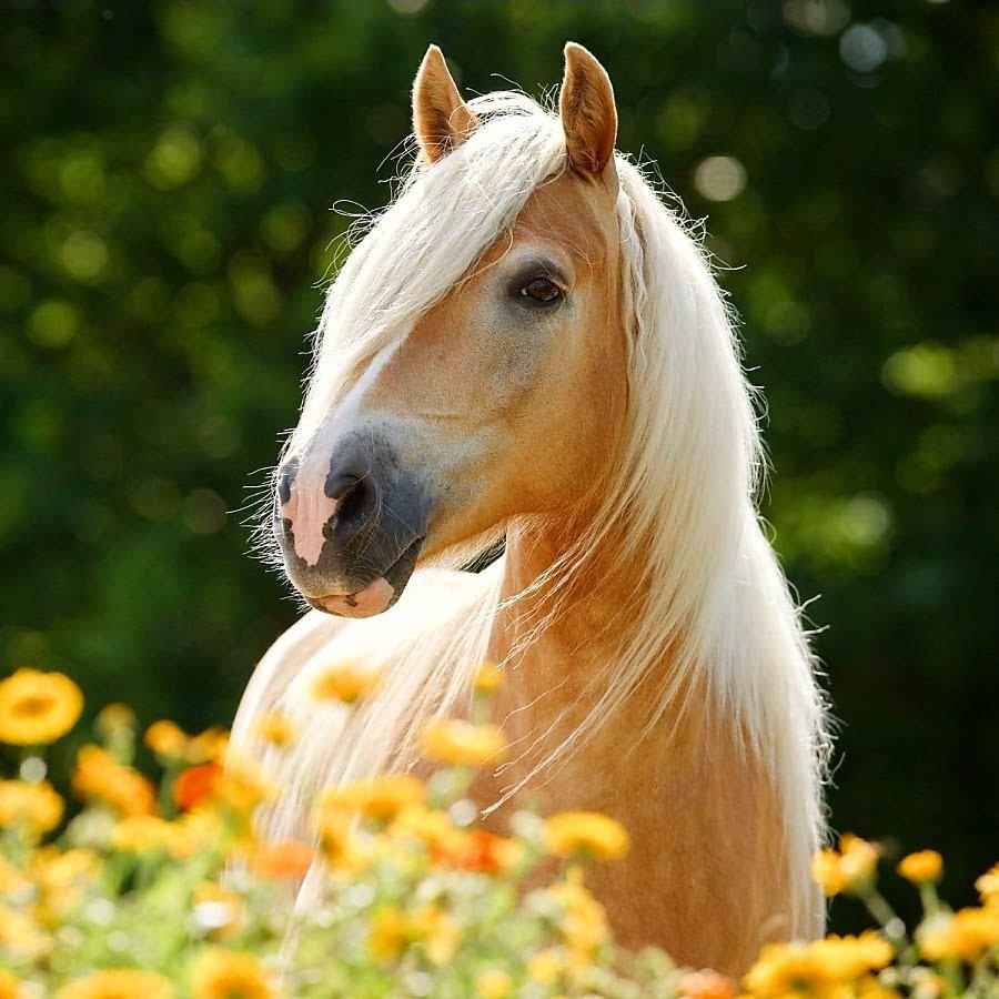 считают изоляцию фото лошадей в картинках легенд повествует