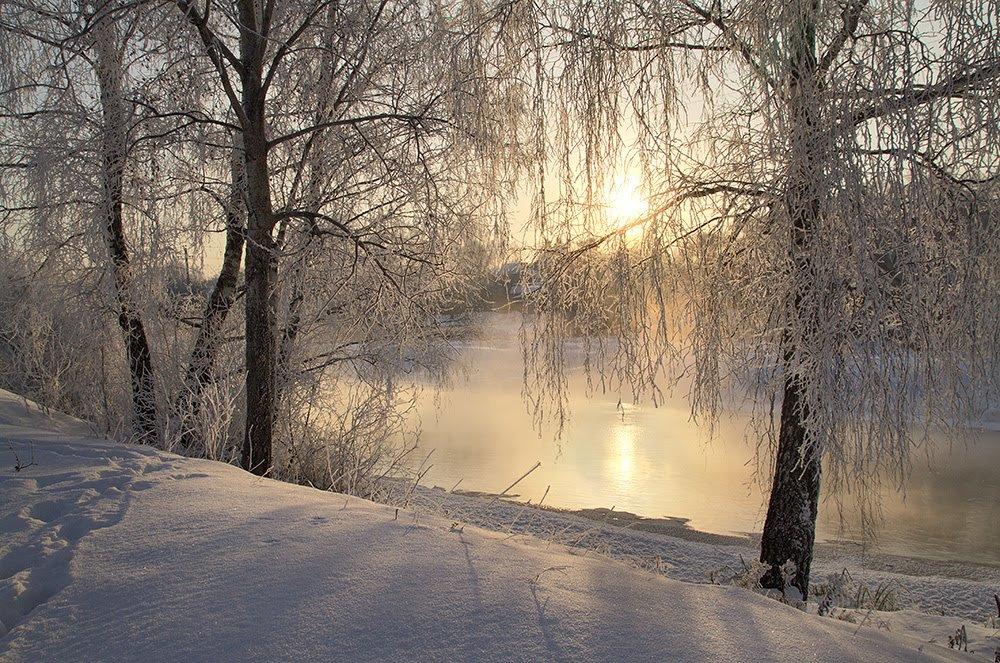 Солнце и лес по берегу реки