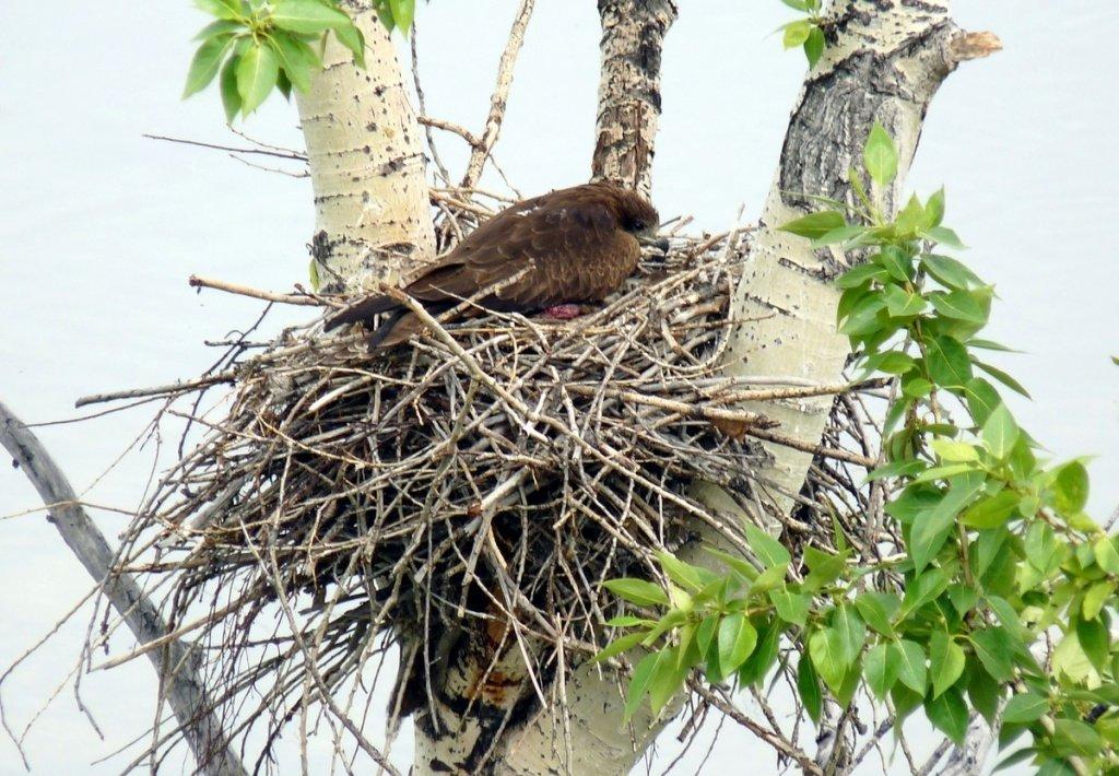 картинка птица вьет гнездо были