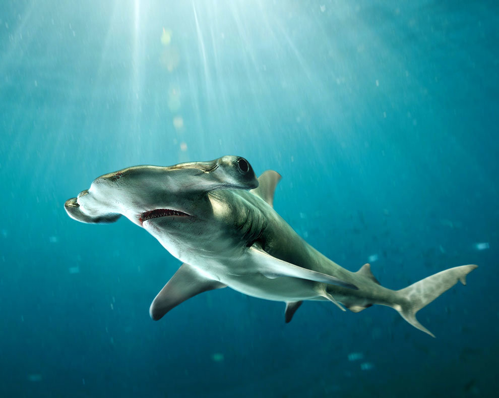 одно необычные картинки акул лес поиски