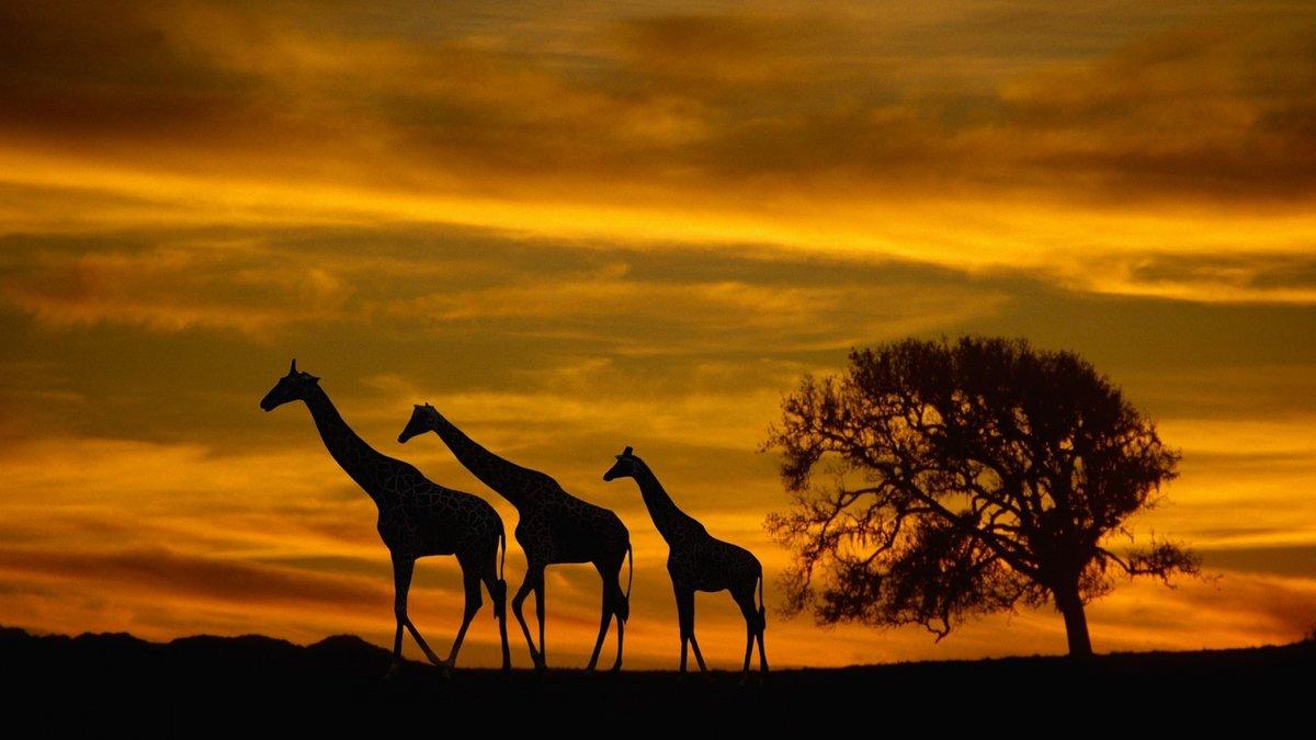 Картинки африки
