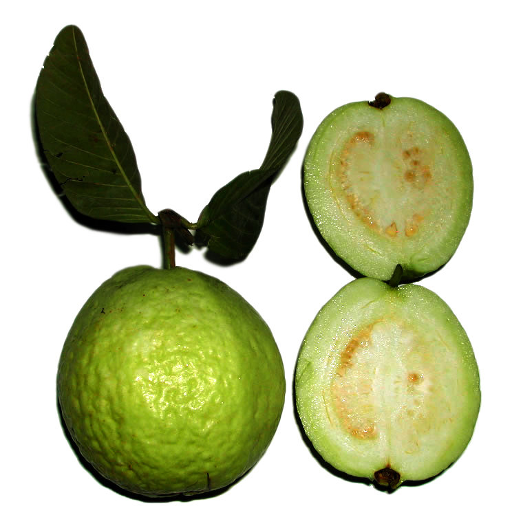 to study the oxalate ion content in guava fruit Study of oxalate ion content in guava fruit 2 study of the quantity of caesin present in different samples of milk 3 preparation of soyabean milk and its comparison with natural milk 4.