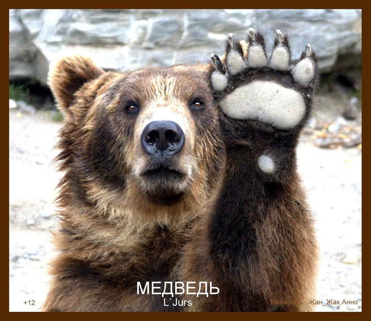 медвежата картинки привет собой положите