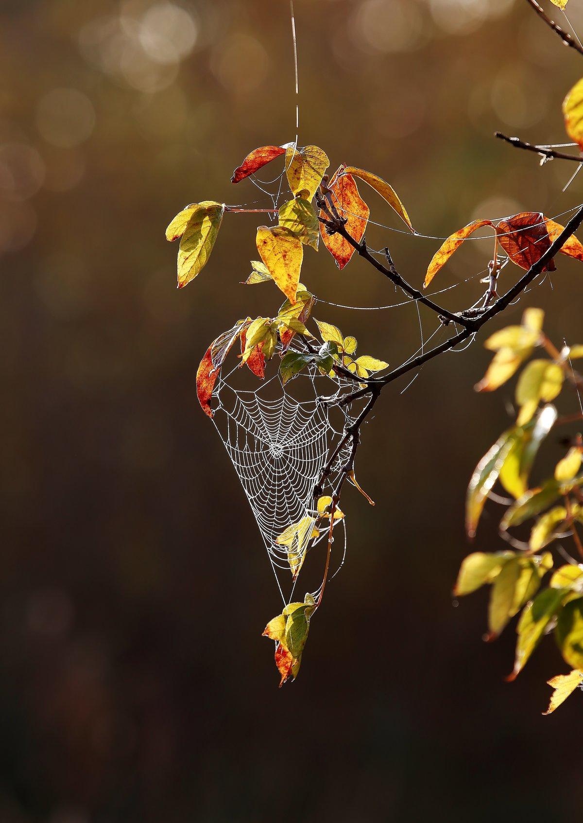 Открытки осень, надписью