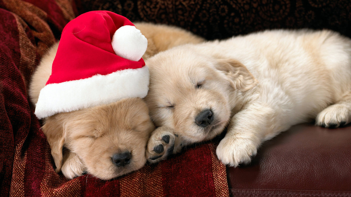 милые щенки