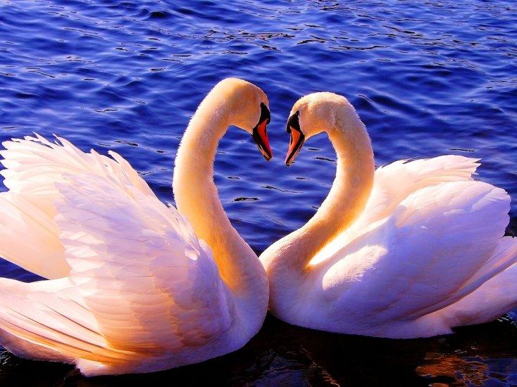 Картинки смайлики, открытка верность лебедей