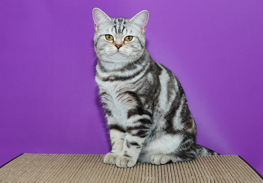 даже картинки мраморная кошка фото каждого