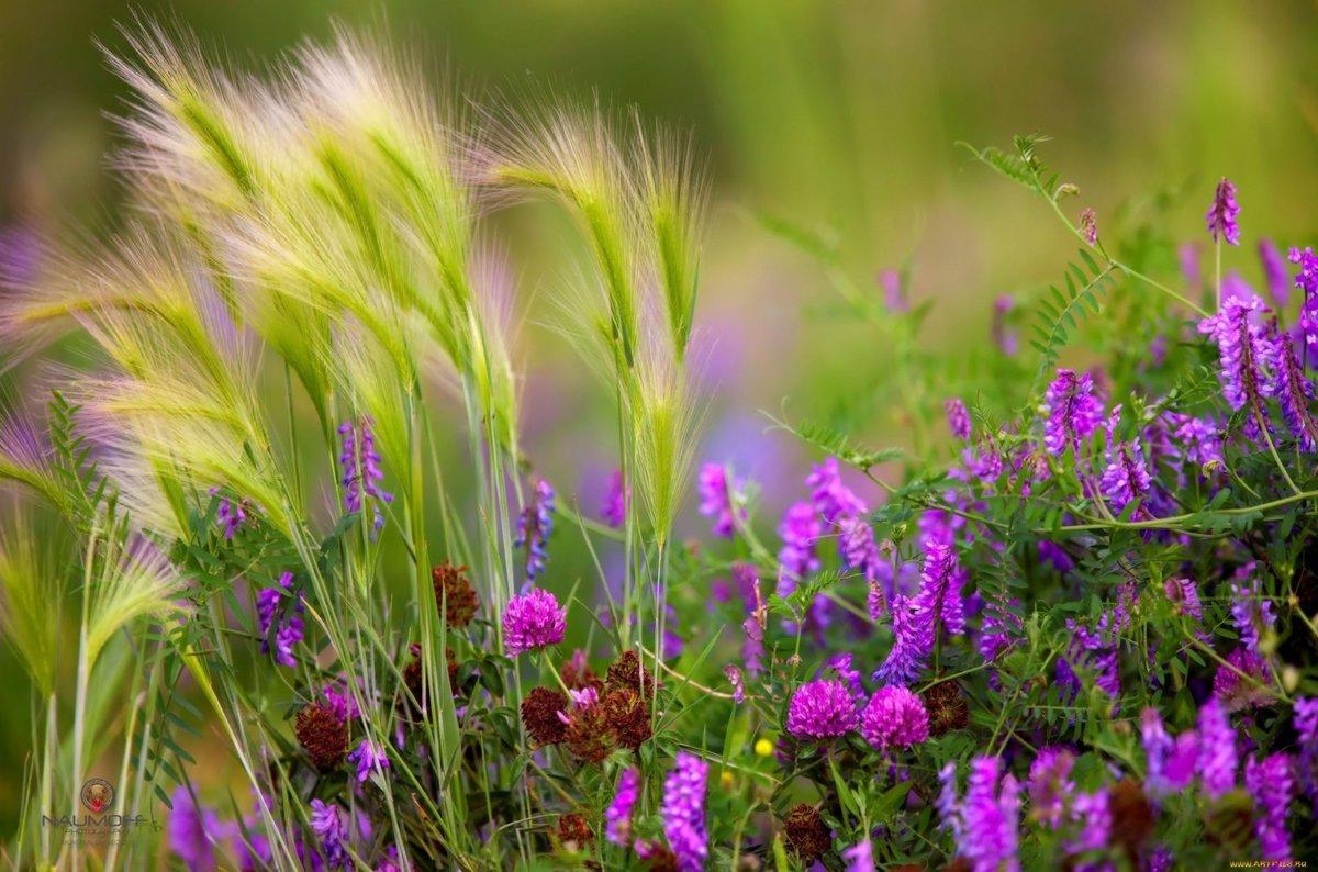 Открытки цветы луговые, открытки