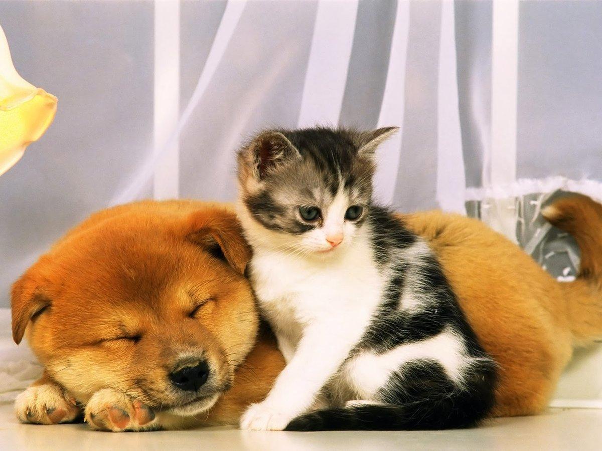 Картинки с котятами и щенками милые, открытки