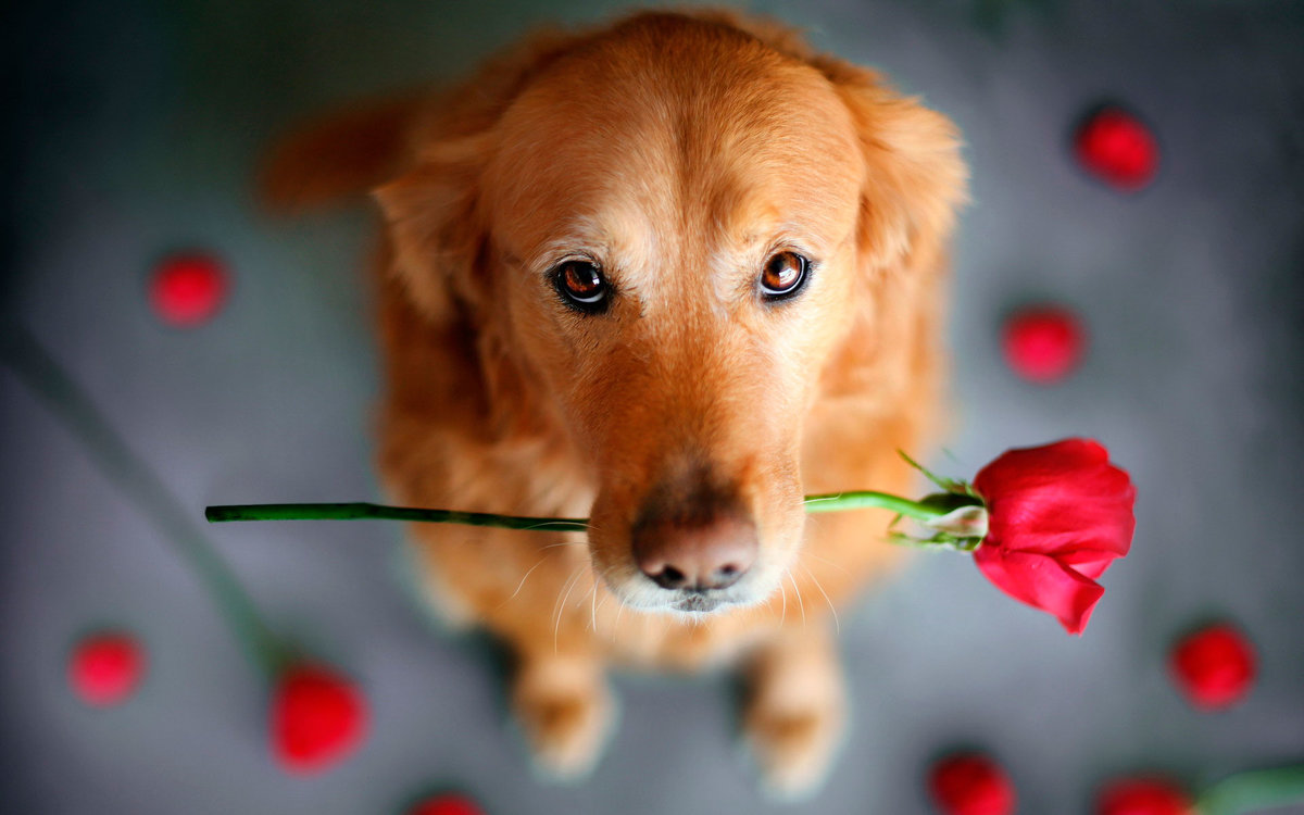 Хочу собаку открытка, февраля
