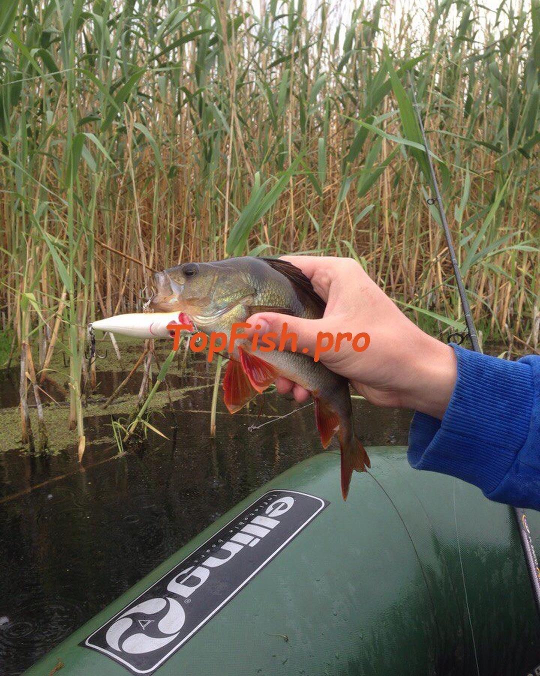 активатор клёва fishhungry купить в твери