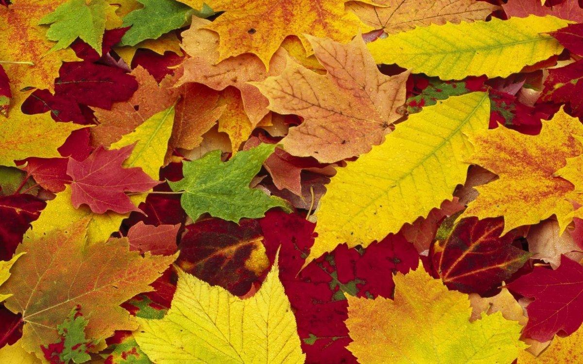 Картинки с изображением осени в сентябре