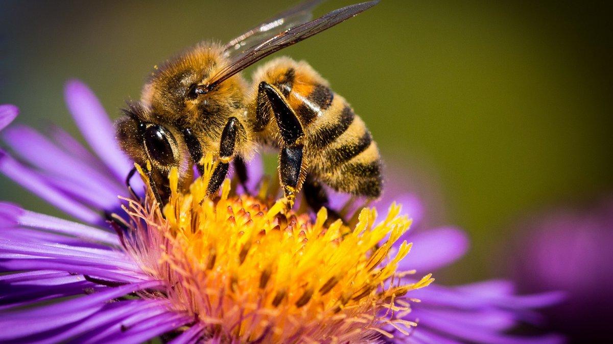картинка яркая пчелы как
