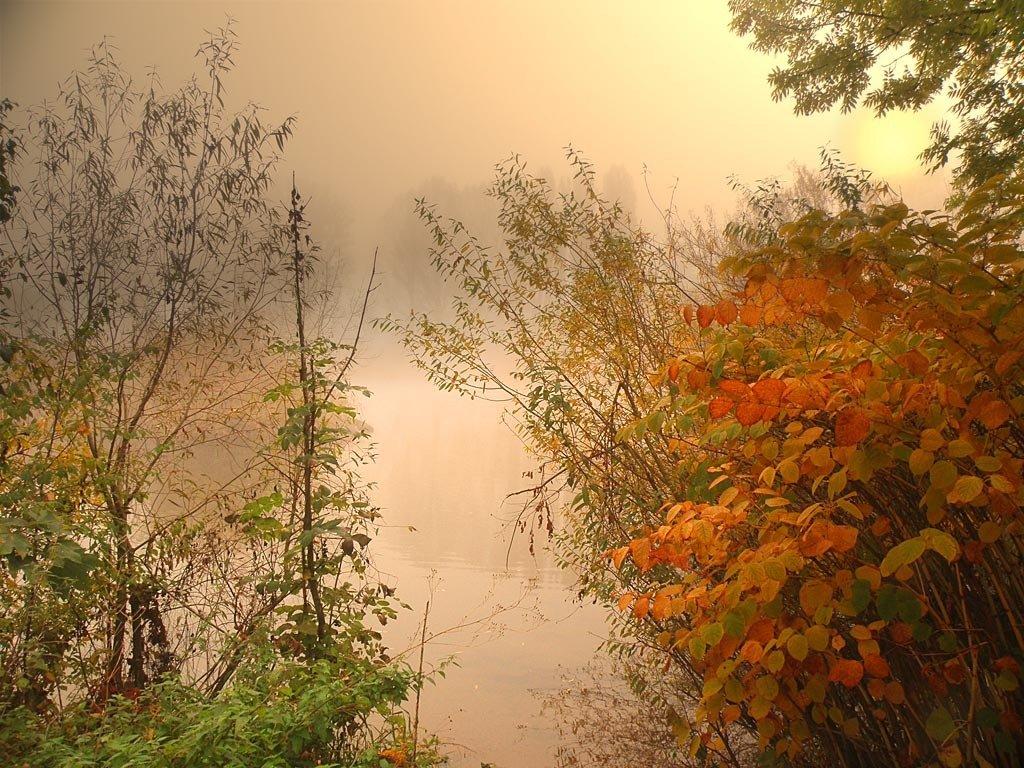 фото осеннего утра примере