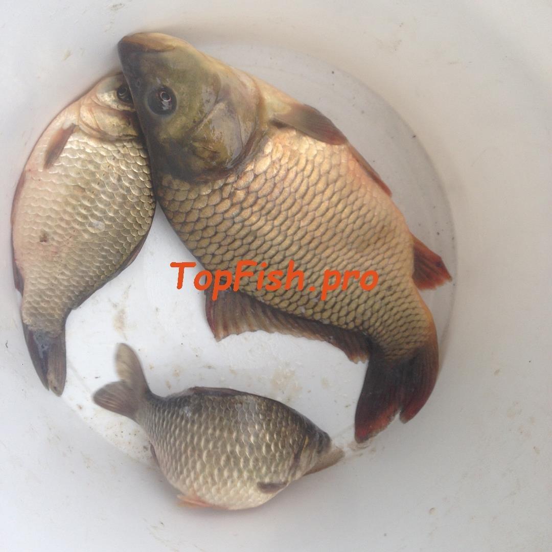 fishhungry минск