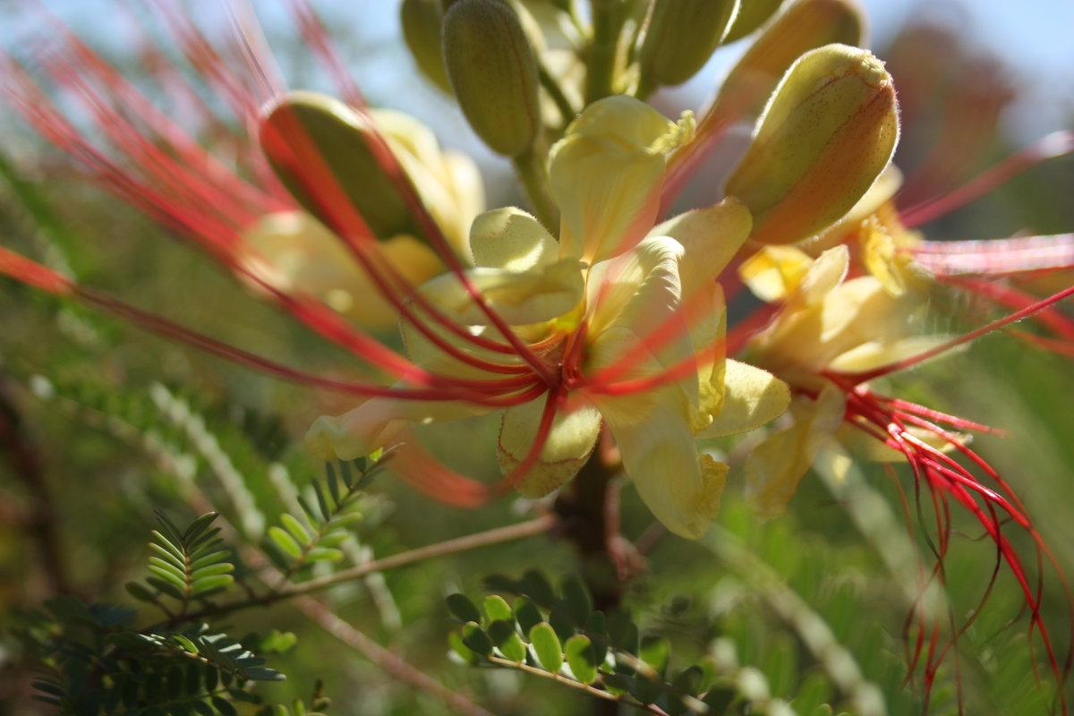 делал цветы египта названия и фото ибицы известны