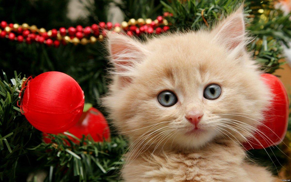 Картинки с животными с новым годом