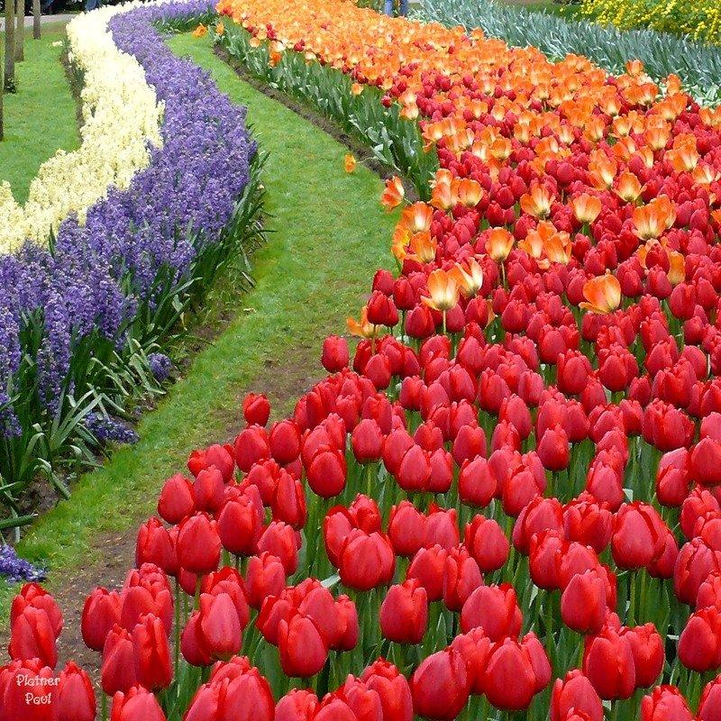 заглотить выебал смотрите картинки по запросу цветы мира фотографии между