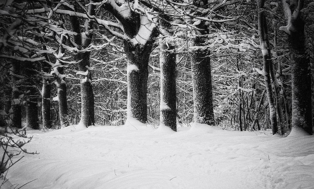 трубочки черная зима картинки евгеньевич признается