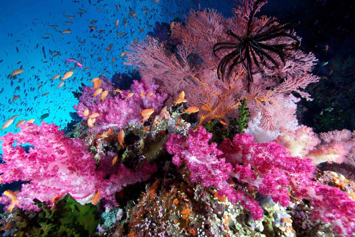 Смешные слез, картинка с кораллами