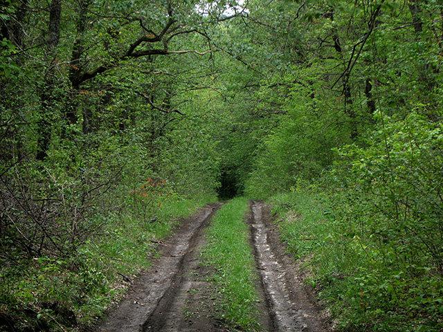 савранский лес дорога в лесу