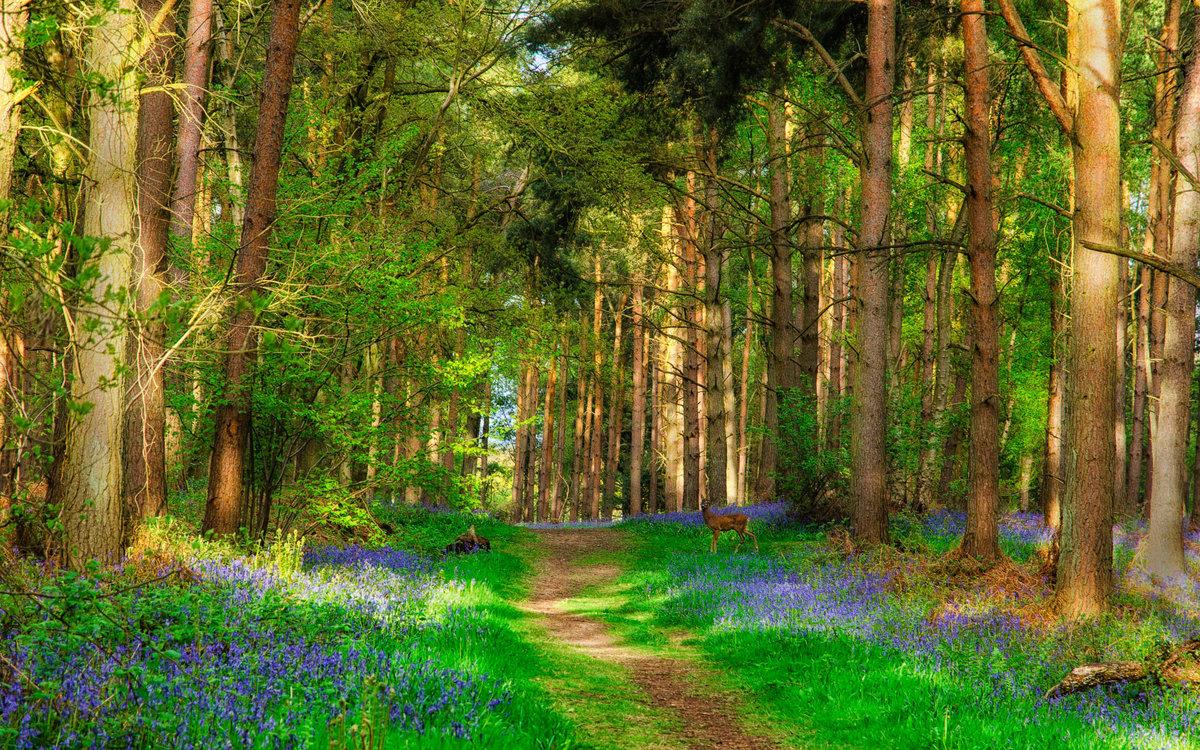 Лето фото красивые природа лес, вверх