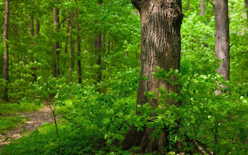 Скачать звуки летнего леса