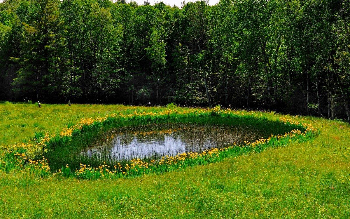 маленькое озеро в картинках