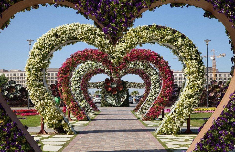 красивые фотографии цветочных аллей картины холсте